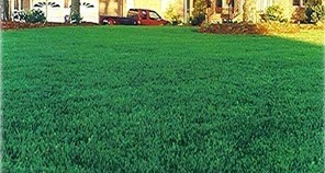 beautiful fescue lawn image