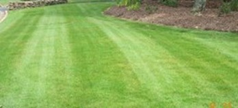 picture of zoysia grass lawn