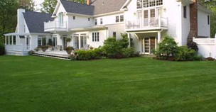 Picture of Tifway 419 Bermuda green grass lawn